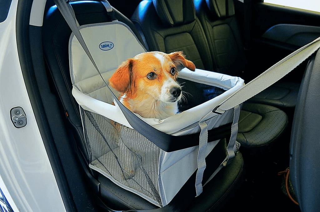 viajar de carro dok despachante cachorro